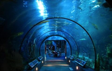 Garden aquarium