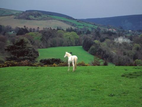 ireland-landscape (1)