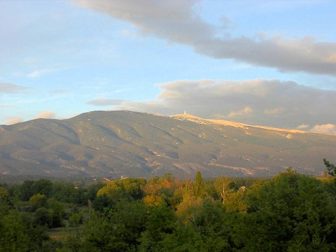 mountain trees ventoux