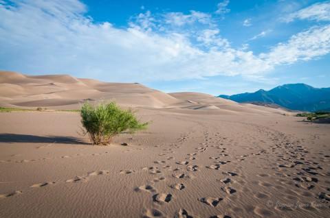 Sand Dunes National Park (2)