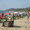 Goa India Complete Travel Guide