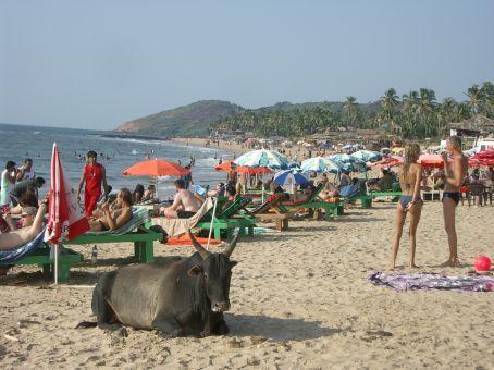 Goa India (4)